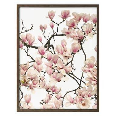 Poster Kadam - Flora Magnolia