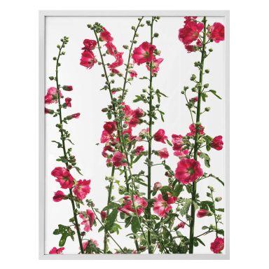 Poster Kadam - Flora Rose