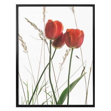 Poster Kadam – Flora Tulpe