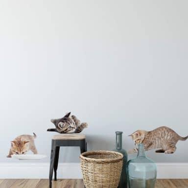 Sticker mural - Set de bébés chats 03