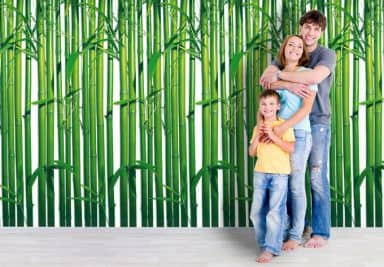 Fototapet - Bambus skov