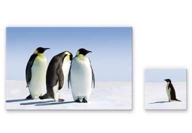 Glasschilderijen Pinguin 2-delig