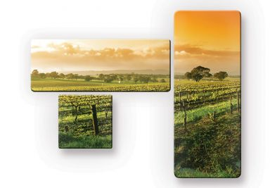 Glasbild Wein im Sonnenuntergang (3-teilig)