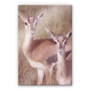 Springboks Acrylic print