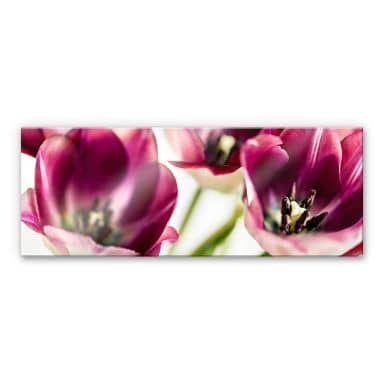 Acrylglasbild Bsmart - Tulips