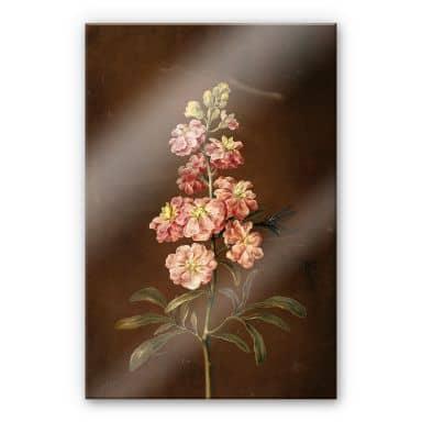 Acrylic glass Dietzsch - A pink garden Levkkoje