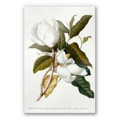 Acrylic glass Ehret - Magnolia