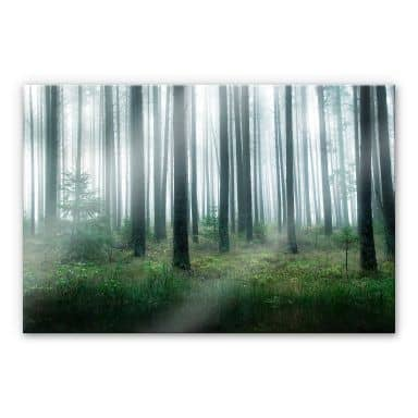 Acrylglasbild Lindsten - Im Wald