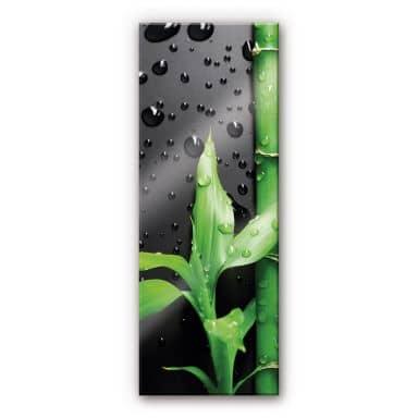Acrylglasbild Bamboo Over Black - Panorama