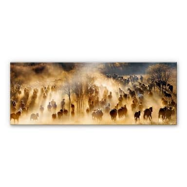 Acrylglasbild Zhu - Wildpferde in den Bergen - Panorama
