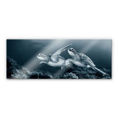 Acrylglasbild Narchuk - Zwei Schildkröten auf Reisen