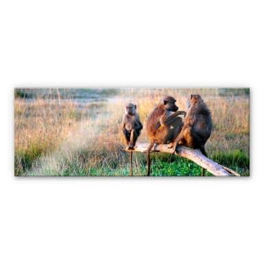 Acrylglas Drie aapjes - Panorama