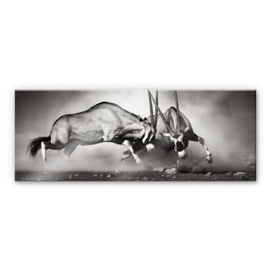 Acrylglasbilder Im Wandbilder Shop Wall Art De