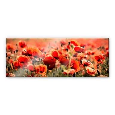 Acrylglasbild Poppy Field - Panorama
