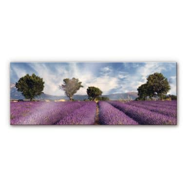 XXL Wall Picture Field of Lavender - Panorama