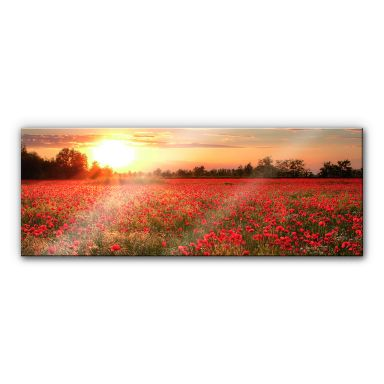 Acrylglasbild Mohnfeld im Sonnenuntergang - Panorama