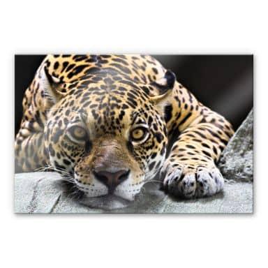 Tableau en verre acrylique - Jaguar