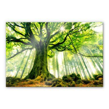 Acrylic glass Kiciak - Fairytale forest