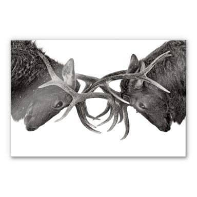 Acrylglasbild Cumming - Machtkampf
