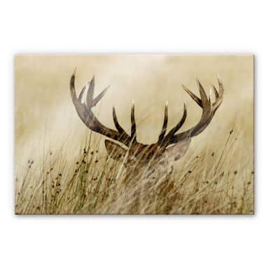 Hidden Deer Acrylic print