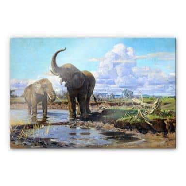 Acrylglasbild Kuhnert - Elefanten an der Wasserstelle