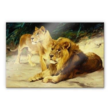 Acrylglasbild Kuhnert - Löwenpaar