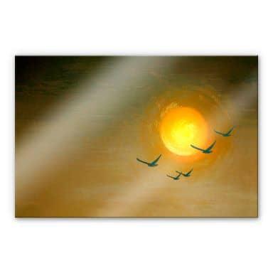Acrylglasbild Melz - Fly
