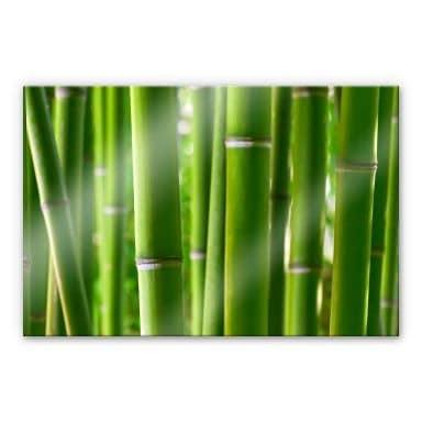 Acrylglasbild Bambuswald