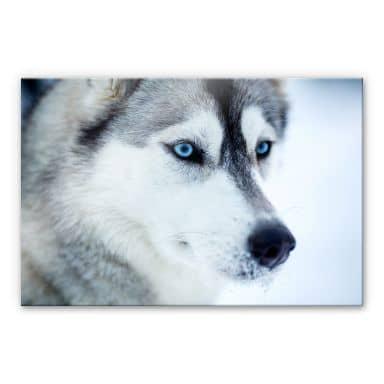 Acrylic glass Ice-blue Eyes