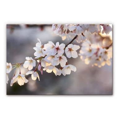 Cherry Branch XXL Wall picture