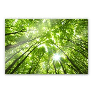 Acrylglasbild Baumkronen im Wald