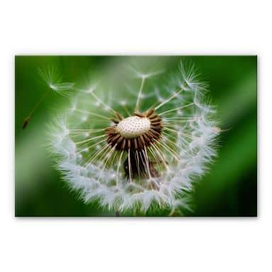 Acrylglasbild Pusteblume im Wind