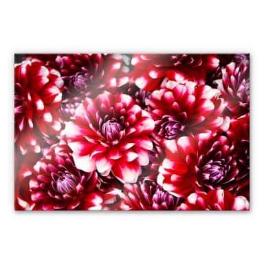 Acrylglasbild Rote Blütenpracht