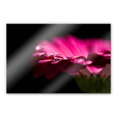Acrylglasbild Waterdrop of Life