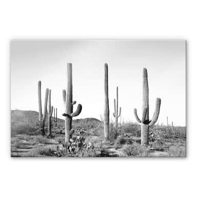 Acrylglasbild Sisi & Seb - Kakteen in der Wüste