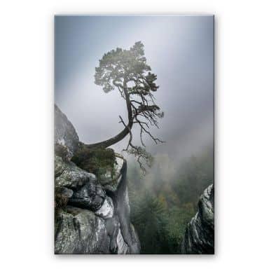 Stampa su acrilico Wonisch - Forza della natura