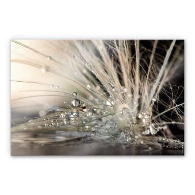 Acrylglas Zahirimehr - Story of a Waterdrop