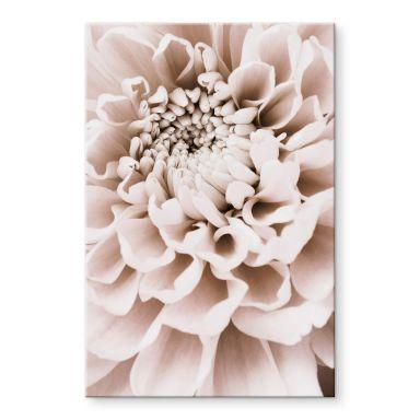 Acrylglas 1X Studio - Chrysant