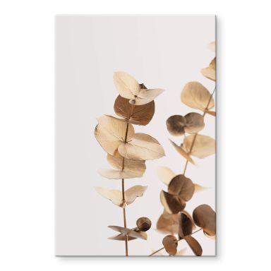 Acrylglasbild 1X Studio - Goldener Eukalyptus