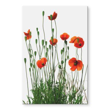 Acrylglasbild Kadam - Flora Mohn