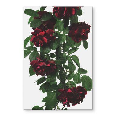 Acrylglasbild Kadam - Flora Rose