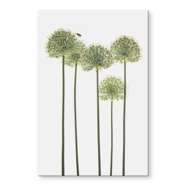 Acrylic Print Kadam - Allium
