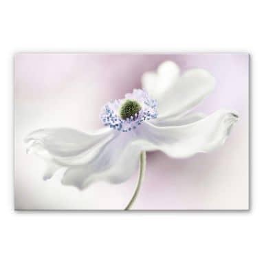 Plexiglas Disher - Anemone Breeze