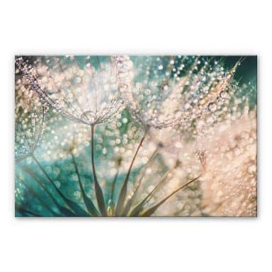 Akrylglasbillede - Delgado - Glittery Dandelions