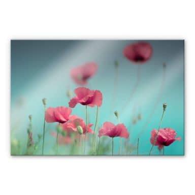 Acrylglasbild Delgado – Mohnblumen Pastell