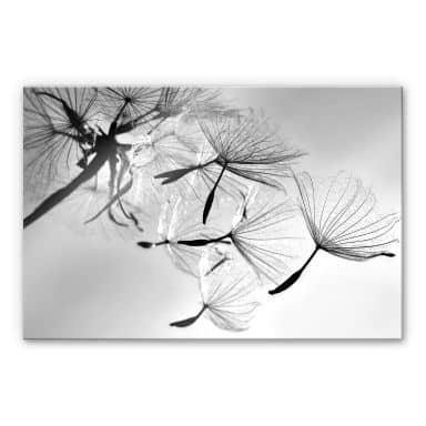 Acrylic Glass Delgado - Dandelion Freedom