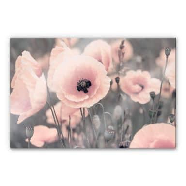 Tableau en verre acrylique Delgado - Coquelicot rose