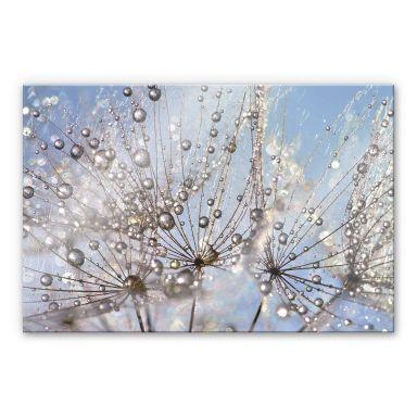 Acrylglasbild Delgado - Wassertropfen in der Pusteblume
