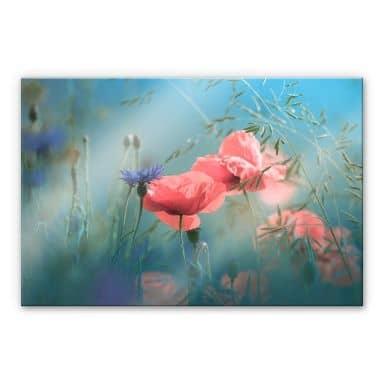 Acrylglasbild Delgado - Wildblumen Aquamarin