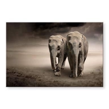 Acrylglas Olifanten